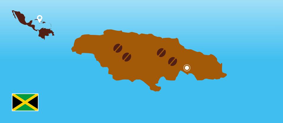 Kaffeezentrale_Kaffeeanbau_Jamaika_RZ