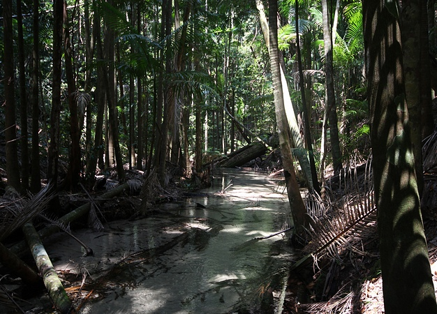 queensland_regenwald